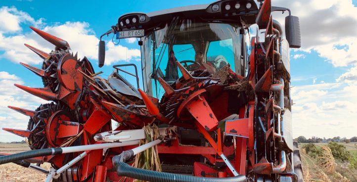 Koszenie kukurydzy